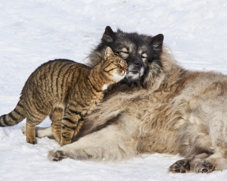 An image of a cat and dog snuggling together in the snow